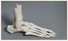 Reflexotherapie occipito podale squelette pied